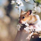 Nom de Hamster - Liste d'Idées de Prénoms Pour son Hamster