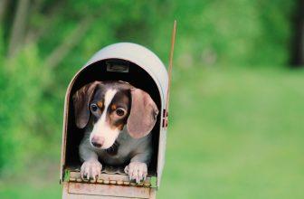 Petit chien caché dans une boîte aux lettres ancienne