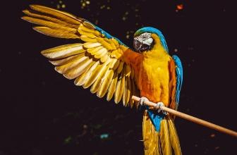 Nom de Perroquet – Liste d'Idées de Prénoms pour Son Perroquet